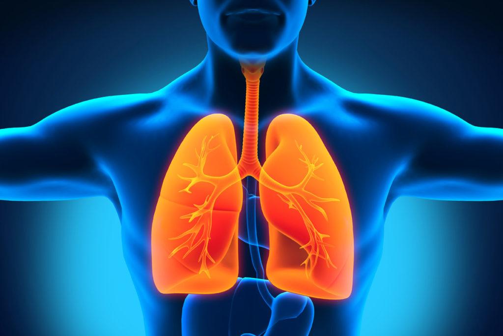 paru-paru manusia