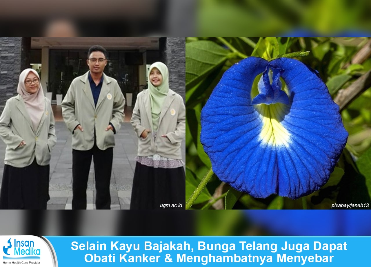 Mahasiswa UGM temukan obat kanker dari bunga telang