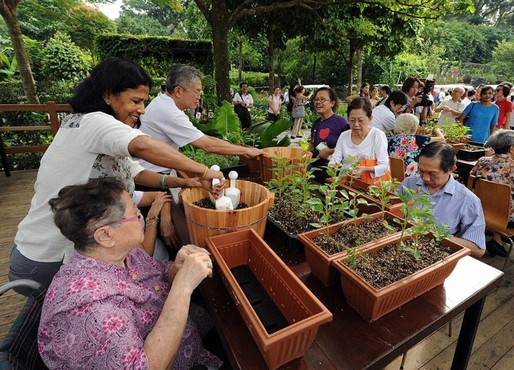 Terapi berkebun untuk lansia